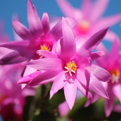 Q26 薬にすると良さそうな花