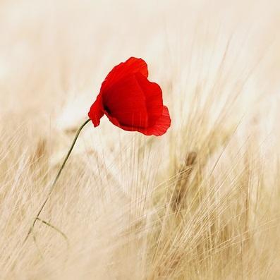 Q168 謝る花