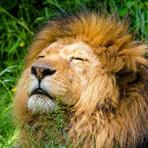 Q386 ライオンの番号