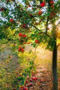 Q418 リンゴに棒