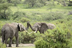 Q425 重さがゼロの象